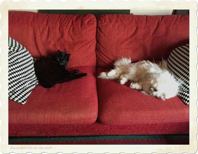 Catsr01.jpg