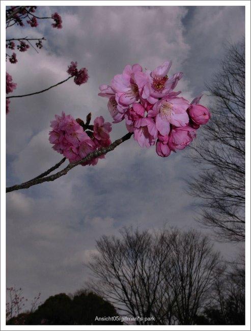 月に叢雲 花に風:Ansicht 05:S...