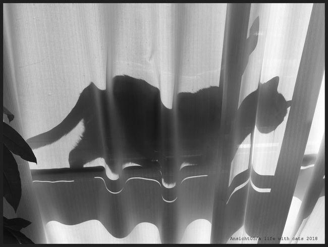 Schattenkatze2018bcl.jpg