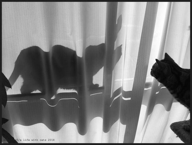 Schattenkatze2018ccl.jpg