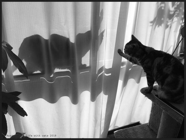 Schattenkatze2018dcl.jpg