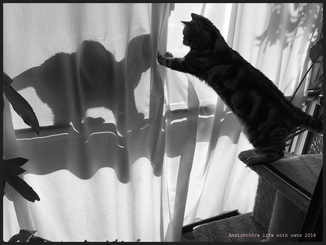 Schattenkatze2018e.jpg