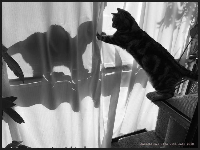 Schattenkatze2018ecl.jpg